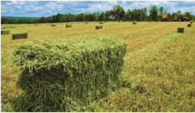 Hay & Straw